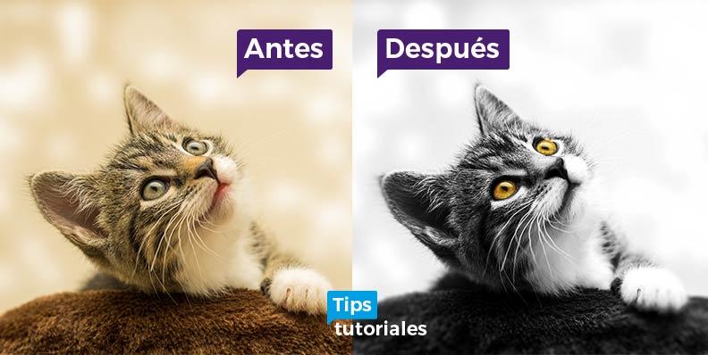 Retoque Photoshop Blanco y Negro Alto Contraste Resaltar Ojos Gato
